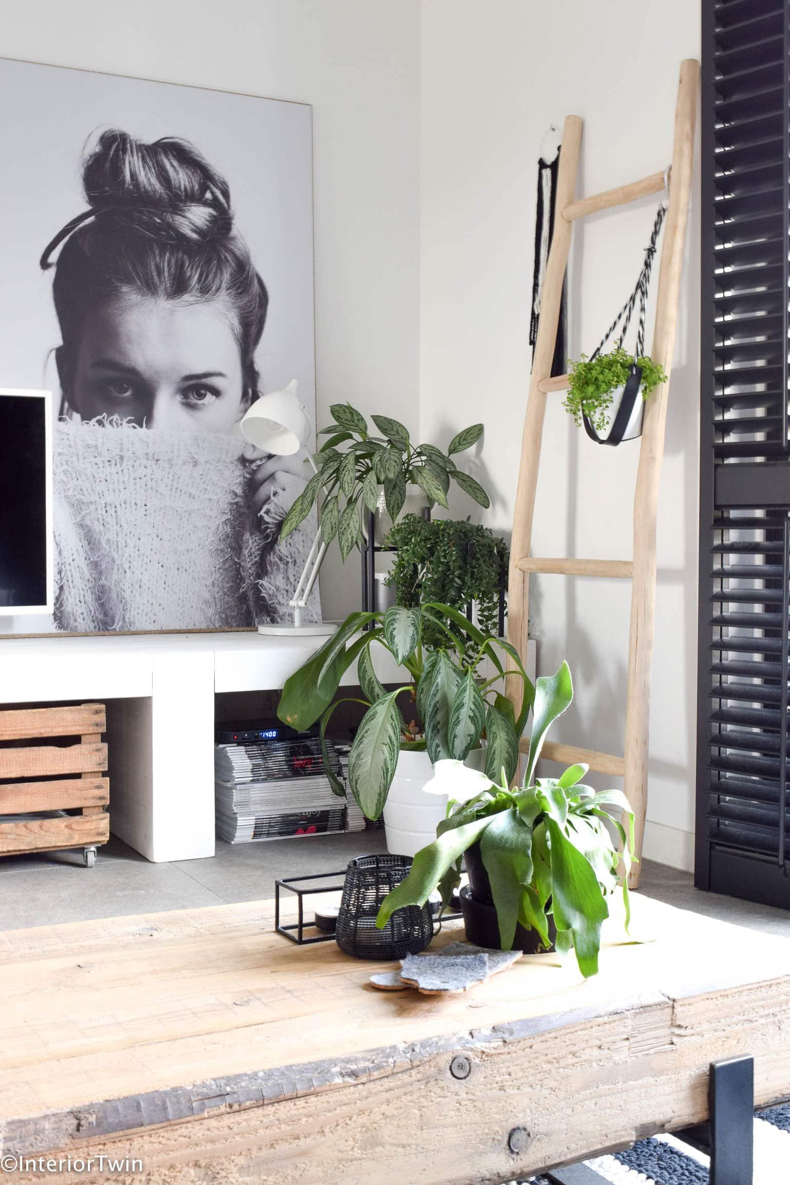 urban jungle in de woonkamer - InteriorTwin