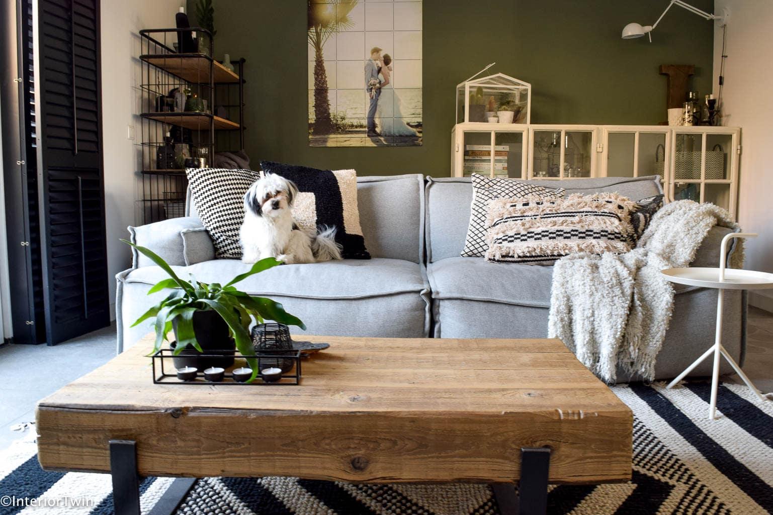 cactussen in de woonkamer - InteriorTwin