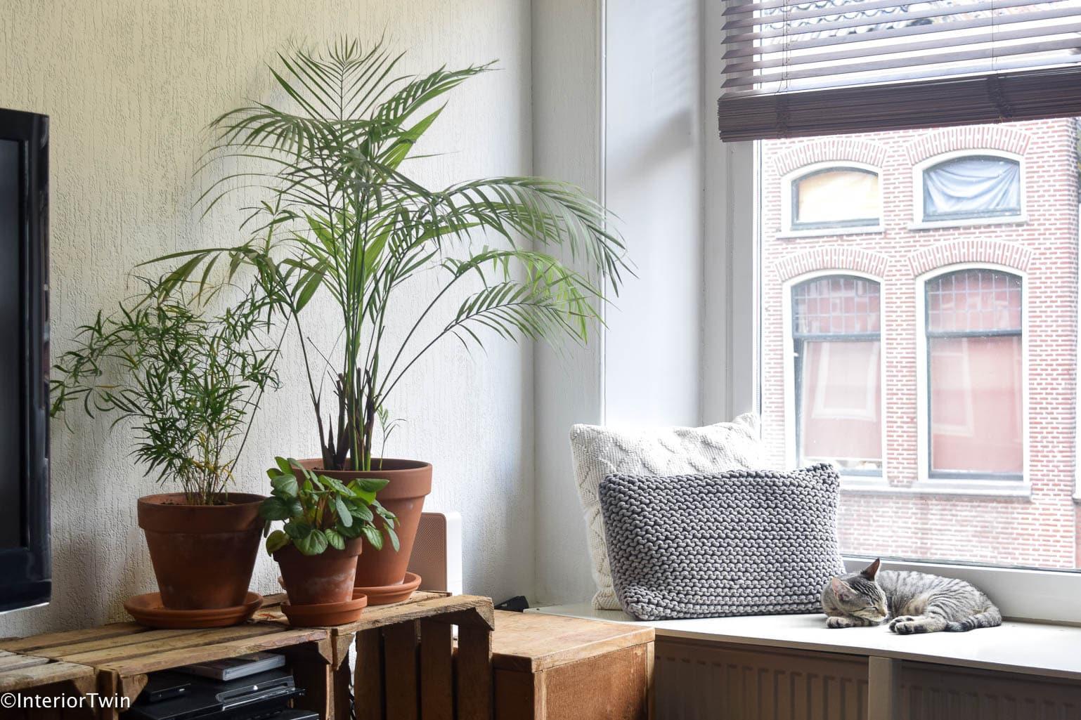 planten in terracotta potten