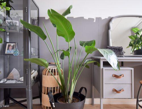 10 grote kamerplanten voor binnen – van makkelijk, schaduw tot veel licht