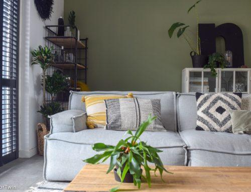 Favoriete kamerplant: de Hertshoornvaren (tips over verzorging en stekken)