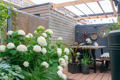 bijzondere planten voor in de tuin