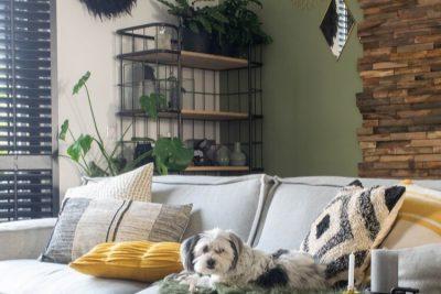 niet giftige planten voor honden en katten