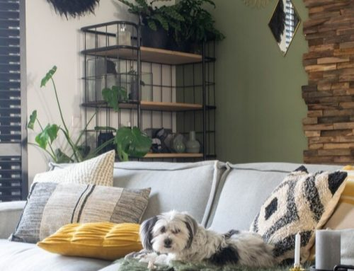 10 niet giftige planten voor honden en katten
