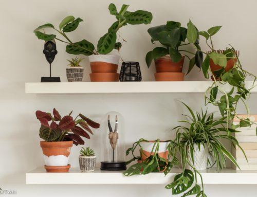 Plantenshelfie: DIY terracotta potten verven
