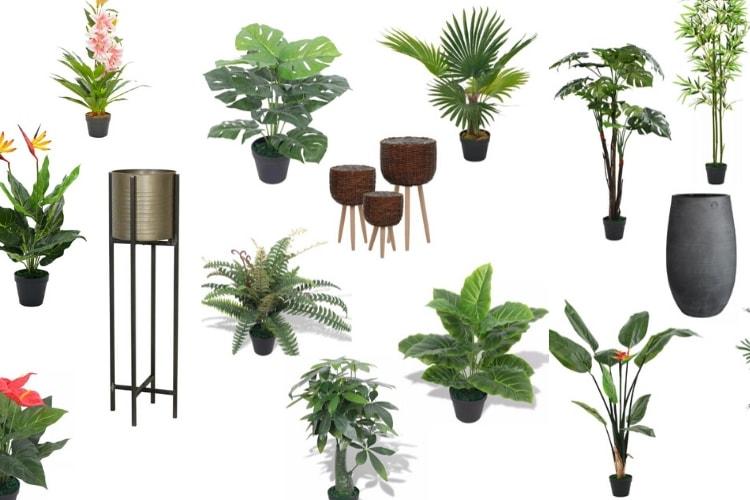 goedkope nep planten