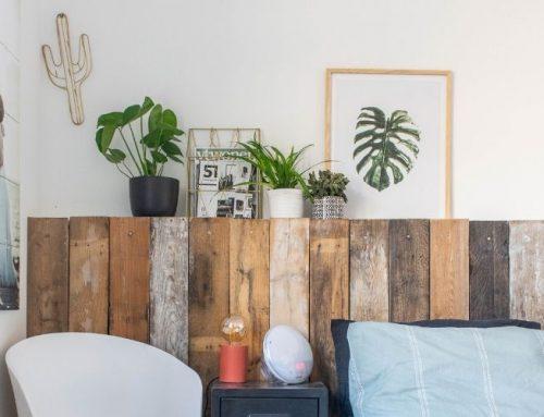 Nieuwe planten in huis en tuin (voor een prikkie!)