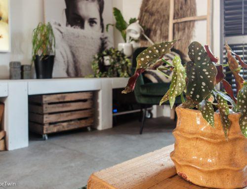 Kamerplanten water geven: zo geef je precies genoeg water