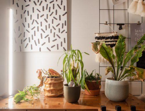 Groeilamp kopen: zo kies je de beste lamp voor je planten
